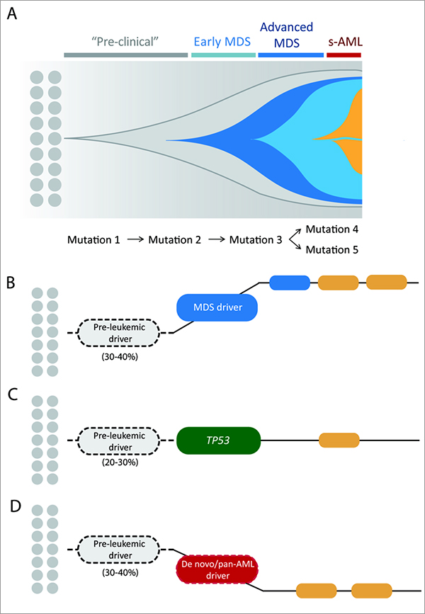 heterogeneity of myeloid malignancies diagram
