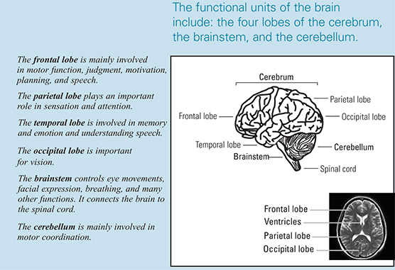 diagram from brain tumors brochure