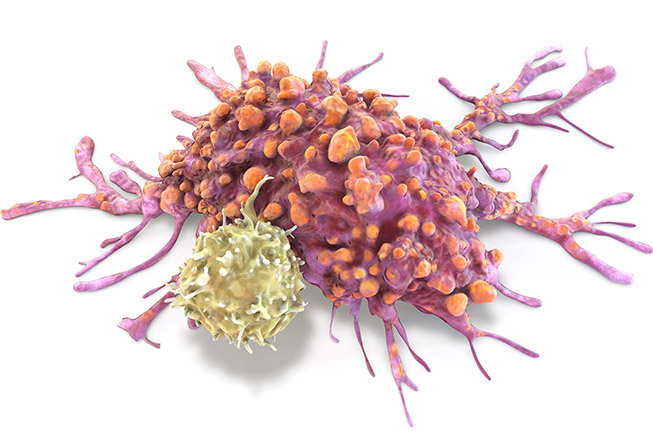 Illustration of a T lymphocyte cell attached to a cancer cell