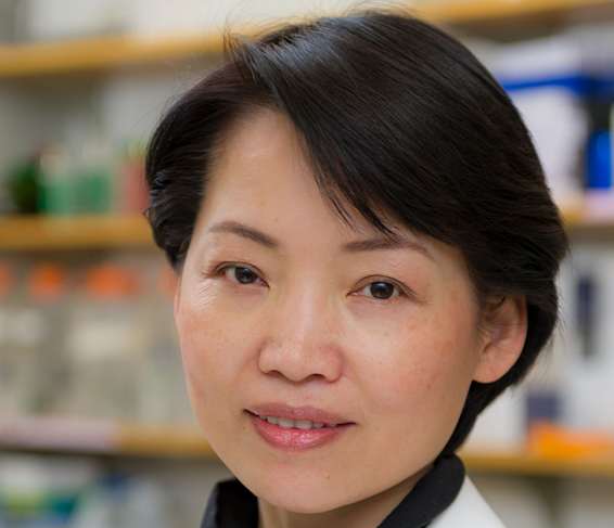 Jean Zhao, PhD