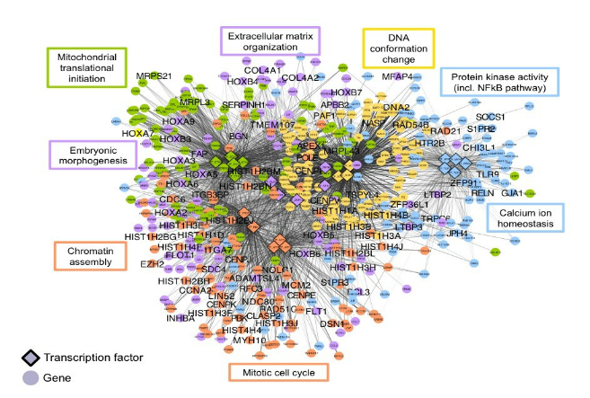Unlocking Cancer's Secrets Using the Social Networks of Cells