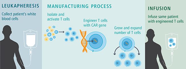 How CAR T-Cell Therapy Works illustration - no heading