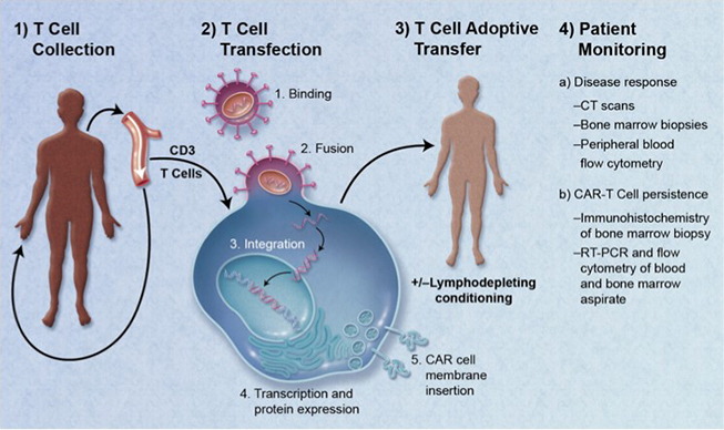 CAR T-cell case study - figure 1
