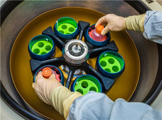 A lab technician places cells in a centrifuge at the Cell Manipulation Core Facility.